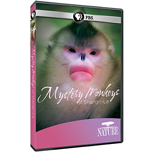 Nature-Mystery-Monkeys-of-Shangri-La-0